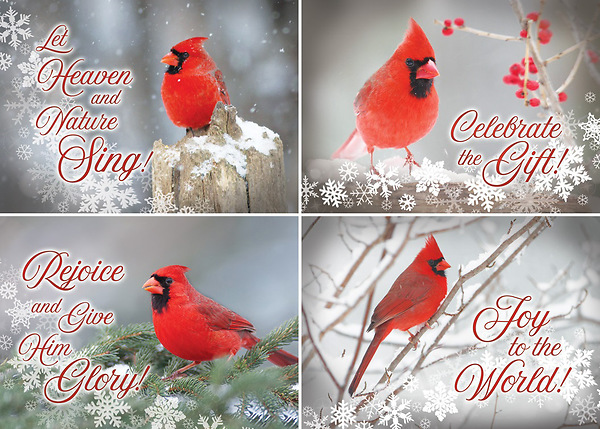 Christmas Cardinals Images.Christmas Cardinals Christmas Assorted Boxed Cards
