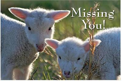 Missing You Lambs Postcard (Package of 25)