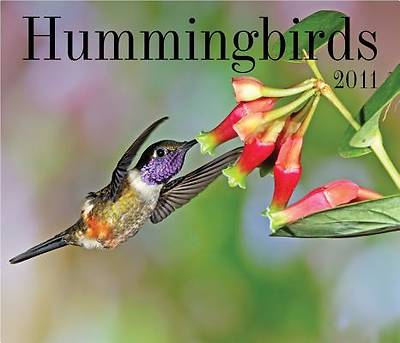 Hummingbirds Wall Calendar 2011