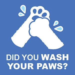 "Picture of Did You Wash Your Paws 15.5""x15.5"" Wall Decal Sign - 2 Pack"