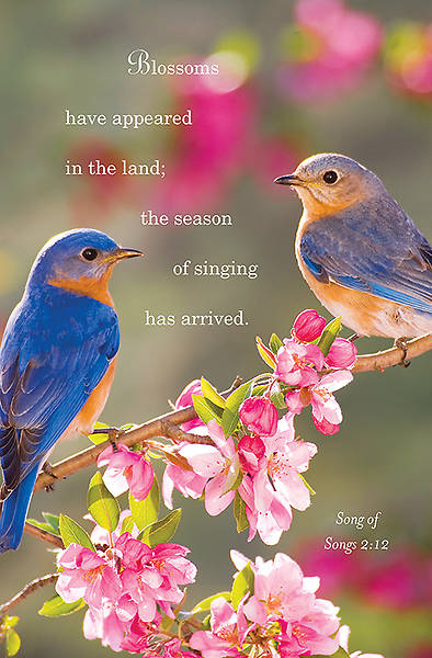 Birds Spring Bulletin 2014, Regular (Package of 50)