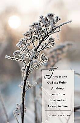 Winter Twig Scripture Series Bulletin (Pkg of 50)