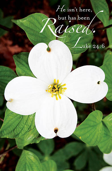 Raised Easter Dogwood Bulletin 2013, Regular (Package of 50)