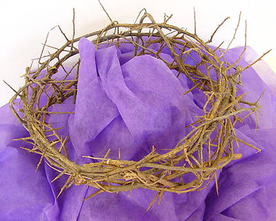 """Picture of Crown of Thorns - Large 11-12"""""""