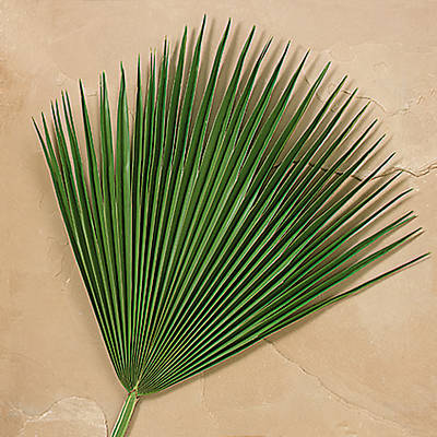 Picture of Fan Palm Branches - Pack of 4