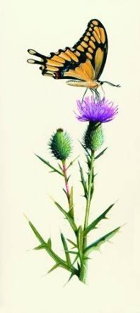 Picture of Thistle and Butterfly [With 10 Envelopes]