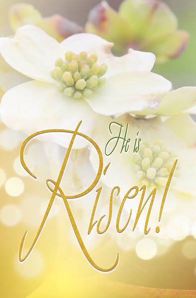 Risen Easter Dogwood Bulletin (Pkg of 50)