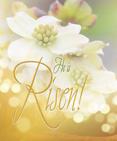 Risen Easter Dogwood Bulletin Large (Pkg of 50)