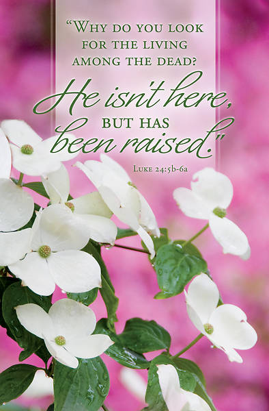 Picture of He Isn't Here Easter Bulletin (Pkg of 50)