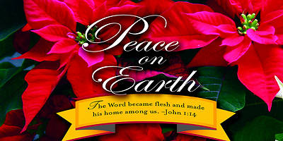 Peace on Earth Christmas Poinsettia Offering Envelope 2012 (Package of 50)