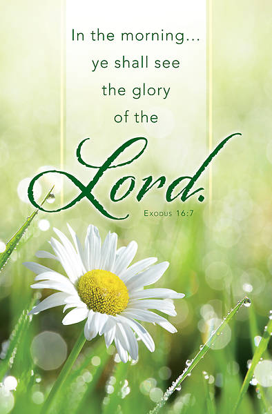 Picture of Glory of the Lord General Regular Size Bulletin