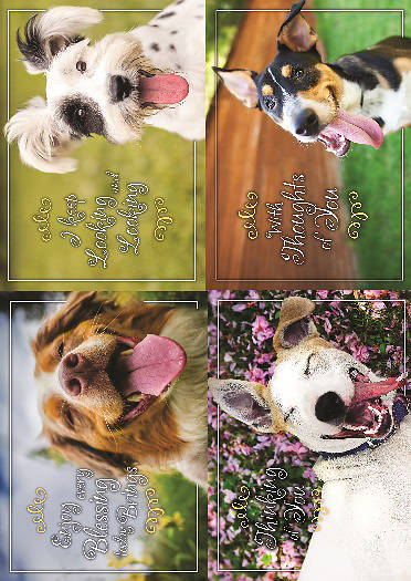 Paws to Reflect Thinking of You Boxed Cards